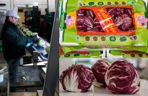 F.lli Cerrato annuncia l'avvio della campagna ortaggi a foglia: la domanda c'è ma i prezzi ancora no